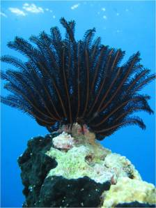 Coral Uniq